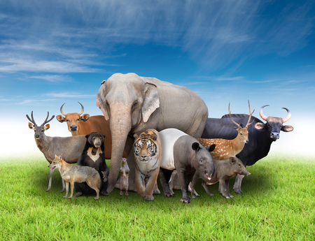 group of asia animals with fresh green grass and blue sky photo