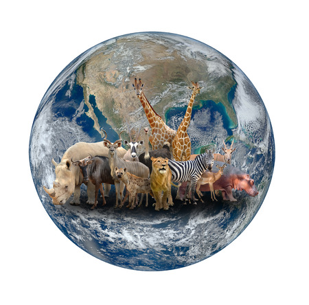 large group of animals: group of africa animal with planet earth, Element of this image are furnished by NASA