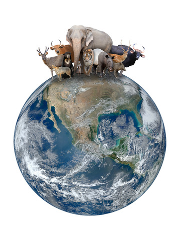 group of asia animal with planet earth, Element of this image are furnished by NASA Stock fotó
