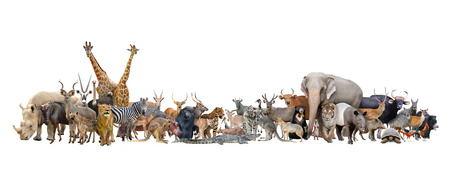 animal of the world isolated on white background Standard-Bild