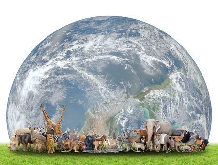 animal of the world with planet earth on white background,Element of this image are furnished by NASA