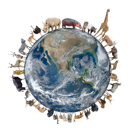 kangaroo white: animal stand around the world isolated on white background,Element of this image are furnished by NASA Stock Photo