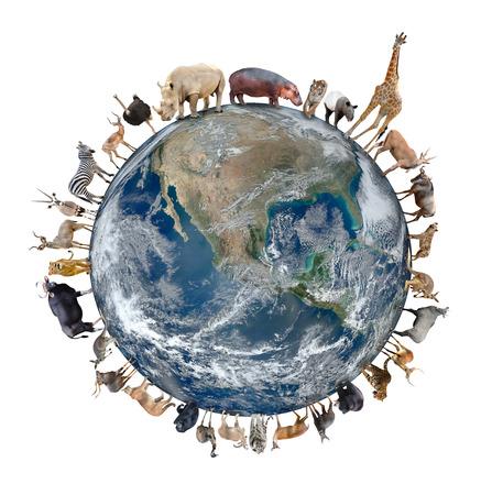 emu: soporte de los animales en todo el mundo aislado en fondo blanco, elemento de esta imagen proporcionada por la NASA están