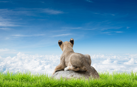 lion baby: baby lion sit on the rock with green grass and blue sky