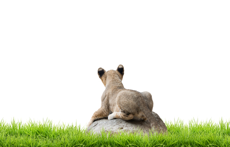 baby sit: baby lion sit on the rock with green grass isolated on white background Stock Photo