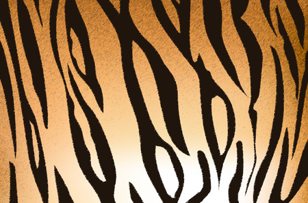 stripe: Vector illustration of bengal tiger stripe pattern