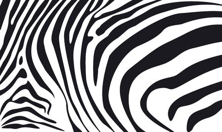 zebra: cebra de la piel de textura de fondo ilustración