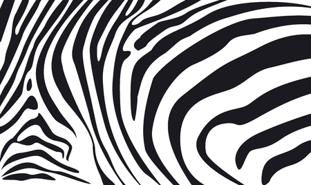 zebra pattern: zebra skin textured background illustration