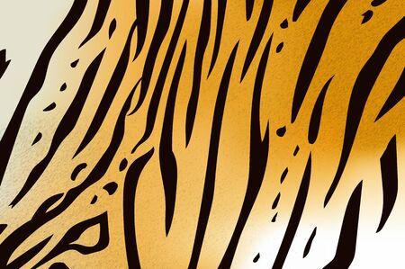 stripe pattern: Vector illustration of bengal tiger stripe pattern