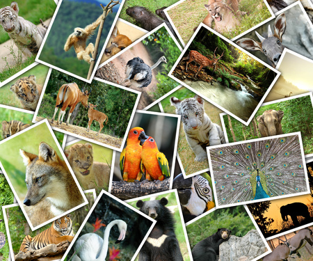animal frame: Pictures of animals pile on the table Stock Photo
