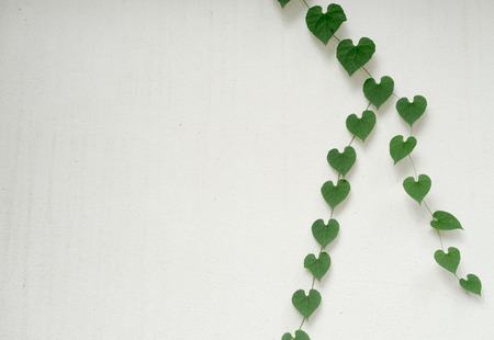 shaped: green heart shaped leaves on white wall