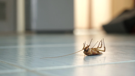 Dead cockroach on the floor after being hit by pesticides. Stock Photo
