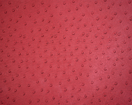 Background textured of ostrich leather close up