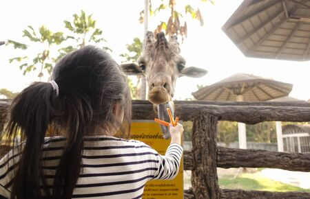 Chiang Mai, Thailand - November 24, 2018:  CHIANG MAI NIGHT SAFARI: zoo with many wildlife animals in natural habitat, One of the main attractions of northern Thailand