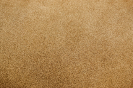 gros plan de la vraie texture de fourrure de lion Banque d'images