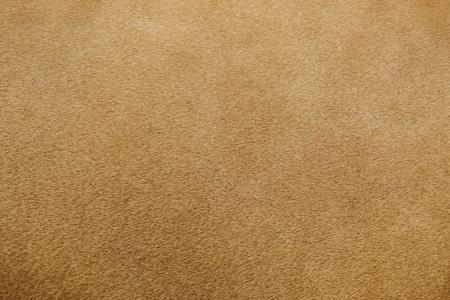 Nahaufnahme von echtem Löwenfell Textur Standard-Bild