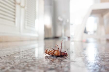 Dode kakkerlak op vloer, ongediertebestrijdingsconcept Stockfoto