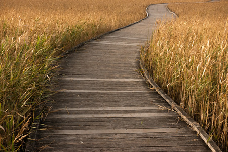 wooden boardwalk passing through golden colour grass Stock Photo