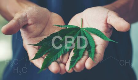 Hand holding marijuana leaf with cbd thc chemical structure