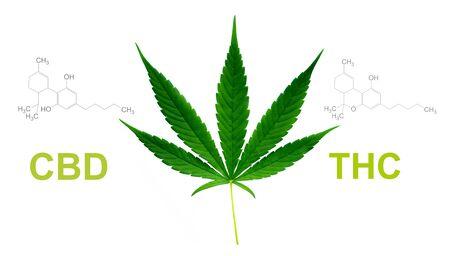 marijuana leaf with cbd thc chemical structure Фото со стока