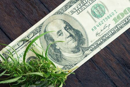 fresh marijuana flower on hundred dollar banknote