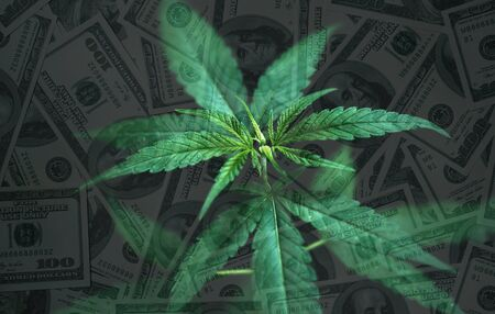 cannabis leaves with dollar banknote in background