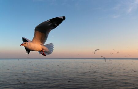 Group of  seagulls flying over the sea at sunset Фото со стока