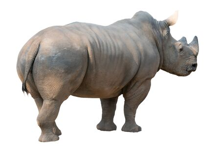 white rhinoceros isolated on white background Stock Photo