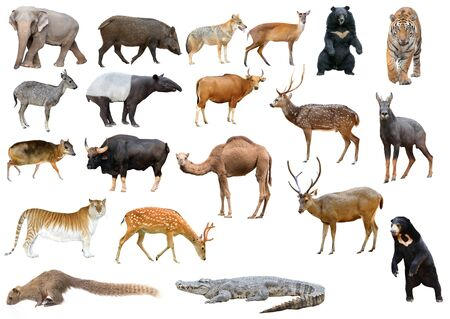 collection of asia animal isolated on white background Stock Photo