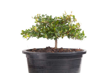 small plant in plastic pot photo