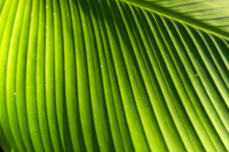 Macro photography of texture on leaf.
