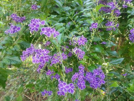 violette fleur: Purple Flower