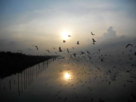 retreat: Seagulls ,Bang Poo Recreational Retreat,  Samut Prakan ,Thailand
