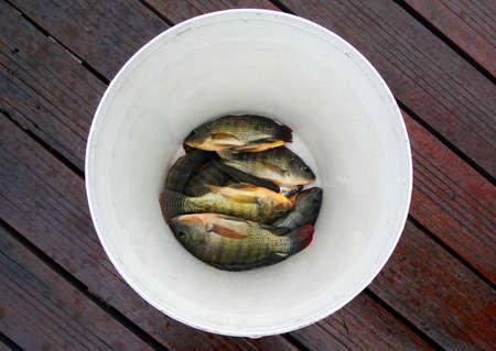 mango fish: The Circle ,Mango Fish