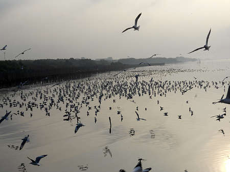 retreat: Seagulls, Bang Poo Recreational Retreat , Thailand