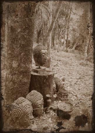 cabeza de buda: la cabeza de Buda en un bosque