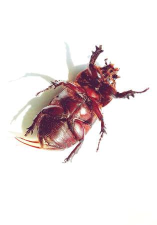 karkas: Beetle karkas