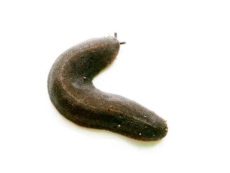 slug: Slug on white background