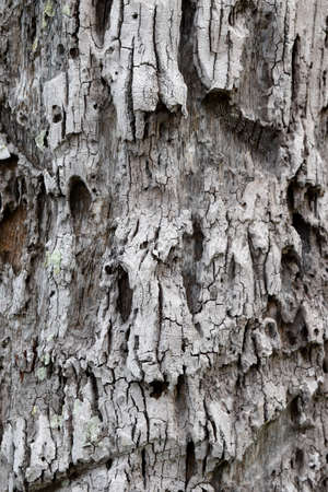 Gray surface are filled with rough holes on trunk of coconut tree,Texture for add text or graphic design Stock Photo