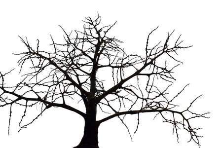 Scary bare black tree silhouette on white background, Branches without leaves