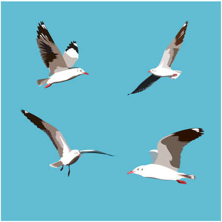 Set of seagull bird flying isolated on blue background, Four Seabird fly on sky