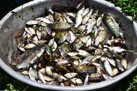 Many freshwater fish in the basin , Fisheries in Thailand , Java barb or Silver barb with Mango fish Stock fotó