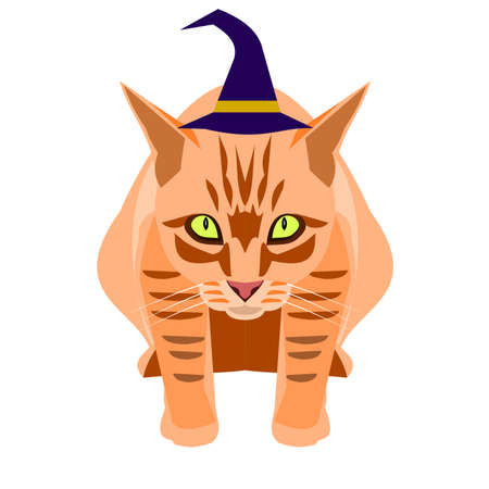 Orange color tabby cat in a witch hat sitting  isolated on white background, Cartoon and graphic about Halloween pets