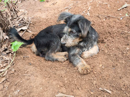 Black and brown striped dog resting in dug hole where it dig, Natural behavior of outdoor pets Banque d'images