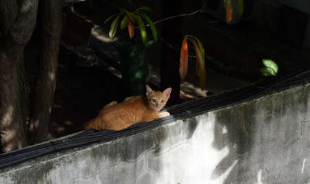 Orange color tabby cat crouched on black wires on old concrete wall with black color in background, Frightened eyes of childhood pet