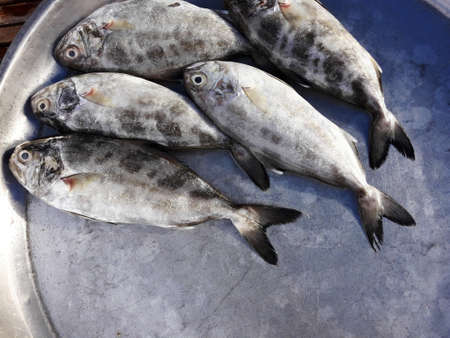 Black-banded trevally fishes in tray at the market, Saltwater fish species in Thailand