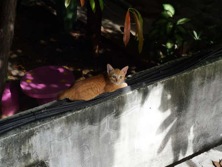 Orange color tabby cat crouched on black wires on old concrete wall with black color in background, Frightened eyes of kitten Banque d'images
