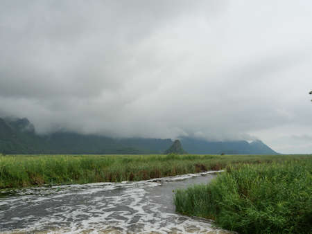 Cloud and fog cover limestone mountain in the rainy season, Swamp and reed field in wetland at Khao Sam Roi Yot National Park, Thailand
