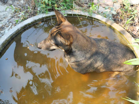 The dark brown dog sitting in the water in the tub, Pet behavior and rest in the summer and during hot weather Banque d'images