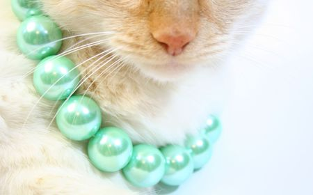 White cat with fancy green beads